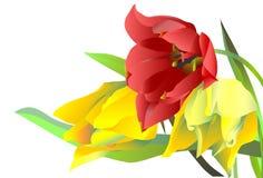 Drie bloementulpen Royalty-vrije Stock Afbeelding