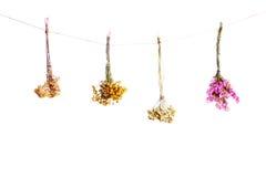Drie boeketten van droge bloemen op een witte achtergrond Stock Afbeelding
