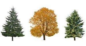 Drie bomen royalty-vrije stock afbeelding