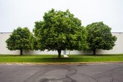 Drie bomen. Royalty-vrije Stock Afbeeldingen