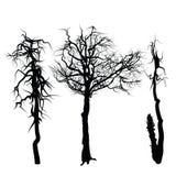 Drie Bomen Stock Foto's