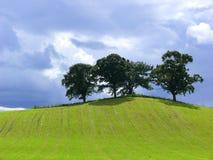 Drie bomen Stock Fotografie