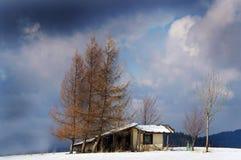 Drie bomen in de wintertijd stock afbeeldingen