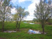 Drie bomen dichtbij de rivier zijn overstroomd in de de lentevloed Stock Foto's