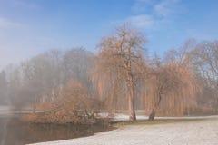Drie bomen door waterkant in de winter Royalty-vrije Stock Afbeelding