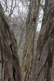 Drie bomen in het bos royalty-vrije stock afbeelding