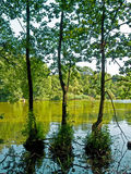 Drie bomen in het water Royalty-vrije Stock Foto