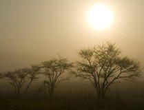 Drie Bomen met Zon Stock Afbeelding