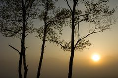 Drie Bomen met Zon II Stock Foto's