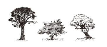 Drie bomen vectorillustratie stock illustratie