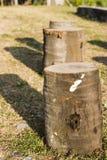 Drie boomstompen stock foto's