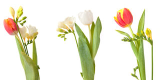 Drie bossen van bloemen Royalty-vrije Stock Fotografie