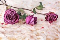 Drie Bourgondië stegen dicht bloemen op geschilderde verfrommelde oude document achtergrond, vakantieuitnodiging of het ontwerp v stock fotografie