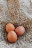 Drie bruine eieren Royalty-vrije Stock Foto's
