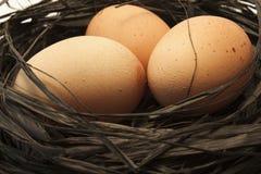 Drie Bruine Eieren in een Nest Stock Fotografie