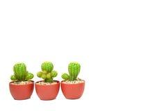 Drie cactuspotten Royalty-vrije Stock Afbeeldingen