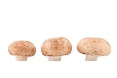 Drie champignons Stock Fotografie