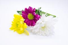 Drie chrysanten doorboren en gele en witte dichte omhooggaande macro Stock Foto's