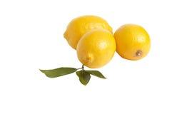 Drie citroenen op een wit. Stock Fotografie