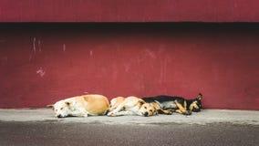 Drie daklozen dwalen honden die op de straat slapen af Stock Foto's