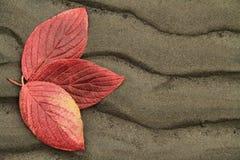 Drie de Herfst Leavess Royalty-vrije Stock Foto's