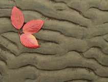Drie de Herfst Leavess Stock Fotografie