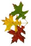Drie de herfstbladeren stock fotografie