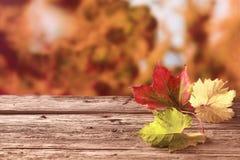 Drie de herfstbladeren in rode geel en groen Stock Afbeeldingen