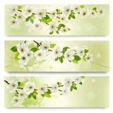 Drie de lentebanners met tot bloei komende boombrunch Royalty-vrije Stock Foto