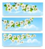 Drie de lentebanners met tot bloei komende boombrunch Stock Foto's