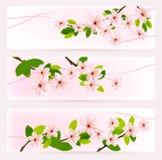 Drie de lentebanners met tot bloei komende boombrunch Stock Afbeelding