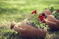 Drie decoratieve kleipot in tuin Royalty-vrije Stock Foto's