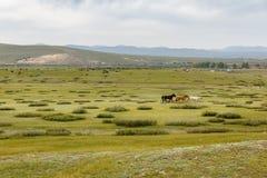 Drie die paarden over de steppe in werking worden gesteld royalty-vrije stock fotografie