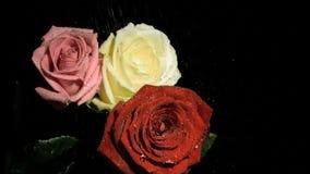 Drie die rozen in super langzame motie water worden gegeven stock videobeelden
