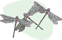 Drie Dragonflys Royalty-vrije Stock Afbeelding