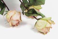 Drie droge rozen Royalty-vrije Stock Afbeeldingen