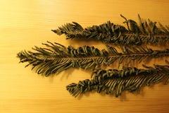 Drie droge takken (Polypodiophyta) van varen Royalty-vrije Stock Afbeeldingen