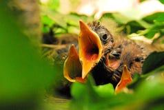 Drie in een Nest 02 Royalty-vrije Stock Foto