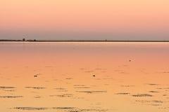 Drie eenden op kalm meer bij zonsondergang Stock Afbeeldingen