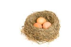 Drie eieren in een nest Stock Foto