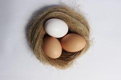 Drie eieren in een nest Royalty-vrije Stock Afbeeldingen