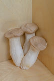 Drie Eringi-paddestoelen Stock Fotografie