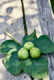 Drie fig. die op een fig.blad zitten bovenop een houten bank in gevlekte zonneschijn royalty-vrije stock foto's