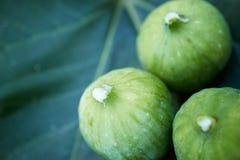 Drie fig. op een vijgeblad met wit sap op de uiteinden stock fotografie