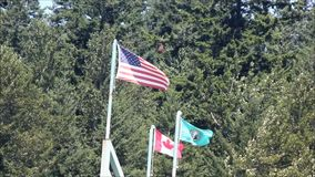 Drie flags1 stock video