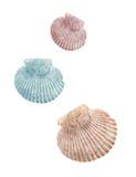 Drie geïsoleerd shells Royalty-vrije Stock Fotografie