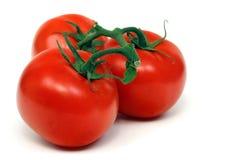 Drie Geïsoleerdek Tomaten van de Wijnstok Royalty-vrije Stock Afbeelding
