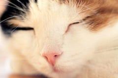 Drie gekleurd het Gezichtsdetail van het Kattenclose-up stock foto's