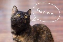Drie-gekleurde kat met een inschrijving royalty-vrije stock foto
