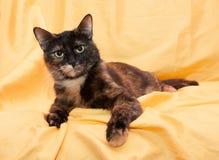 Drie-gekleurde kat met gele ogen die streng liggend kijken Royalty-vrije Stock Foto